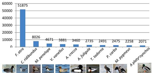 International Waterbird Census 2016, Albania (the Results)